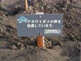 ウミガメ表札