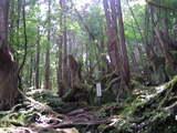 蓼科原生林