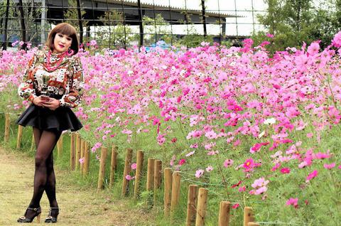 花ファンタジア08/清水公園