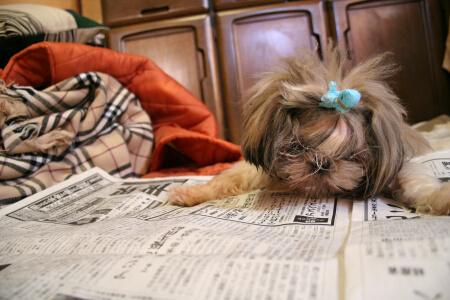 新聞すみずみまで読むよ。