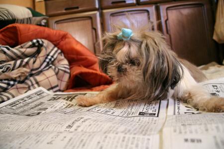 新聞読んでるんだから邪魔しないで。