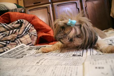 新聞読むよ。