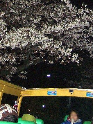 夜桜バスツアー11