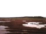 サンゴ草遠景