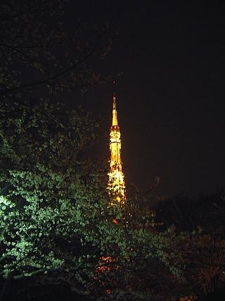東京タワー(夜桜)増上寺2