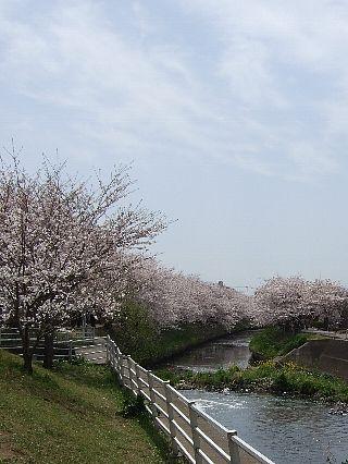 0411桜04