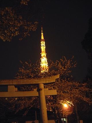 東京タワー(夜桜)増上寺4