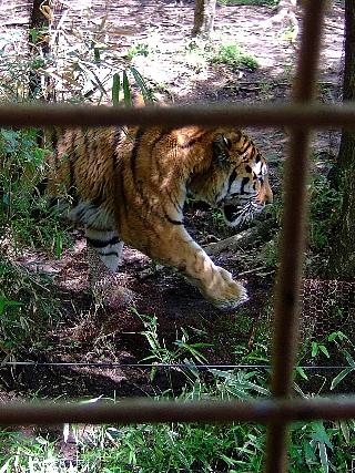 ジャングルバス03トラゾーン01