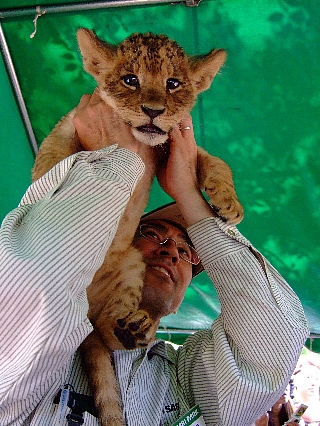 1245子ライオン06
