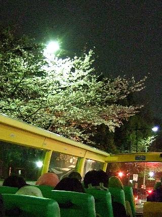 夜桜バスツアー09