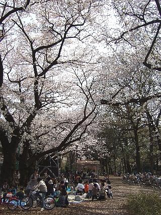 石神井の桜06