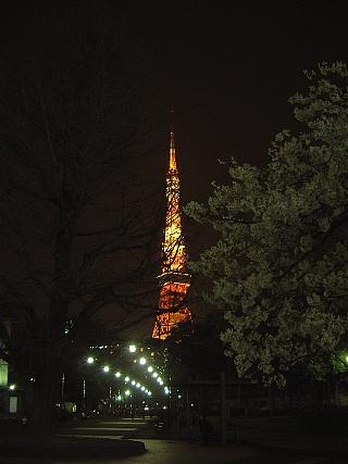 東京タワー(夜桜)遠景2