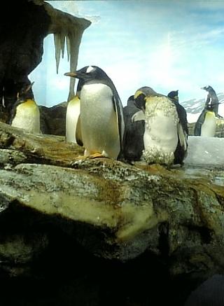 0506ペンギン