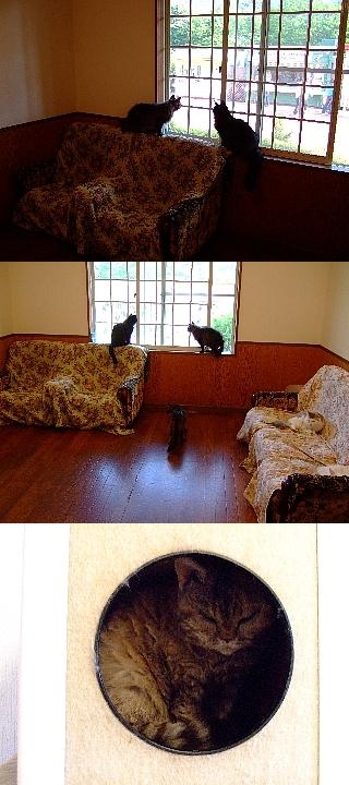 ネコの館11