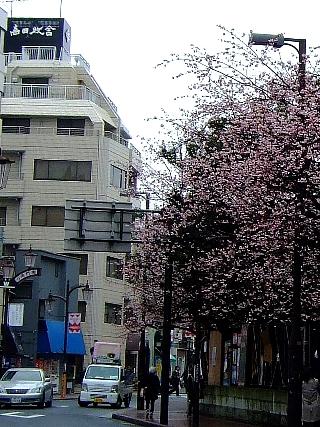 早稲田の桜100306