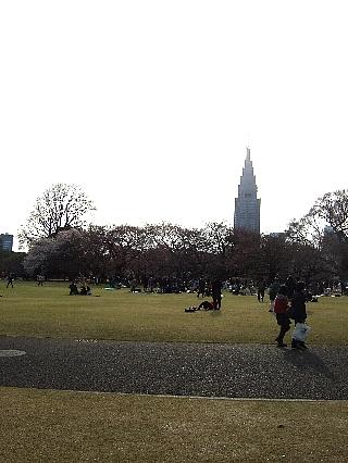 新宿御苑の桜04