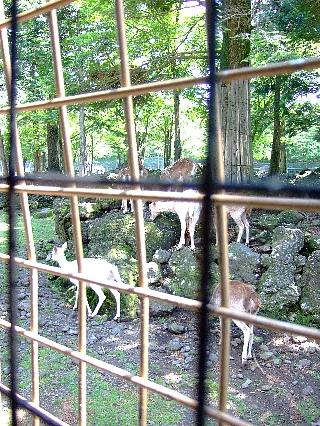 ジャングルバス07山岳草食ゾーン01