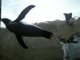 旭山Zooペンギン