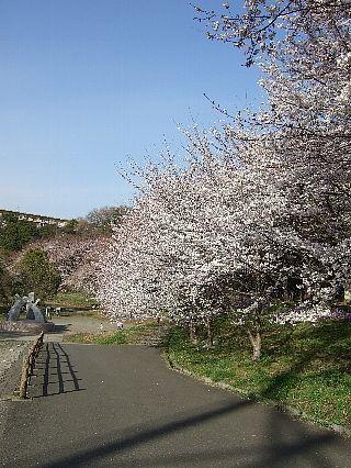 0407桜01