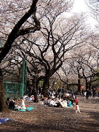 石神井の桜07