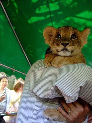 1440子ライオン01