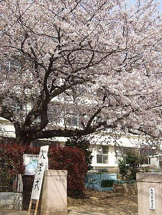 0411桜09