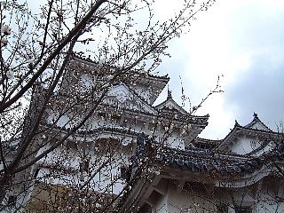 姫路城(桜)