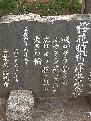 0411桜13