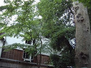 16欅の木陰