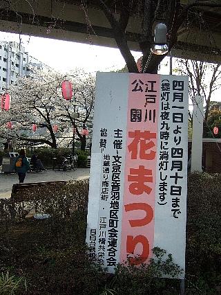 江戸川橋の桜04