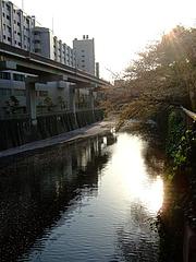 2008_0406sakura0018