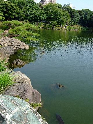 清澄庭園04