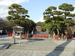 鶴ヶ丘八幡大銀杏03