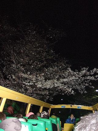 夜桜バスツアー10
