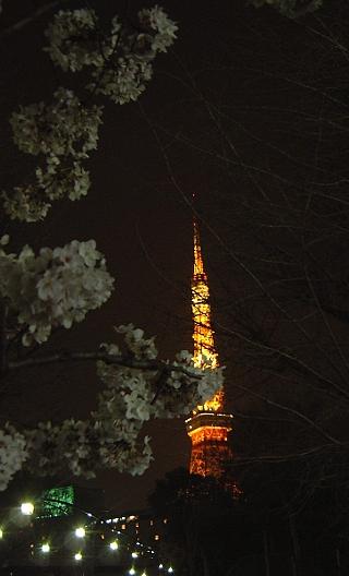 東京タワー(夜桜)遠景3