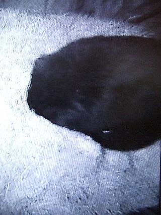 熊の冬眠03