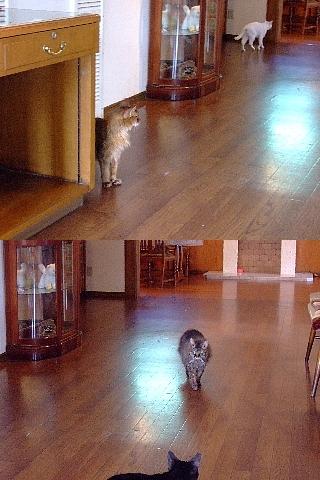 ネコの館10