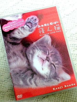 寝ん猫01