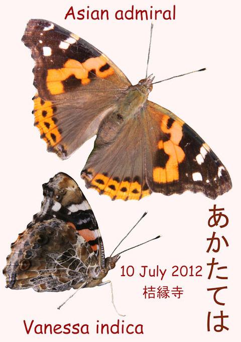 120710 AKATATEHA-2(結縁寺)s