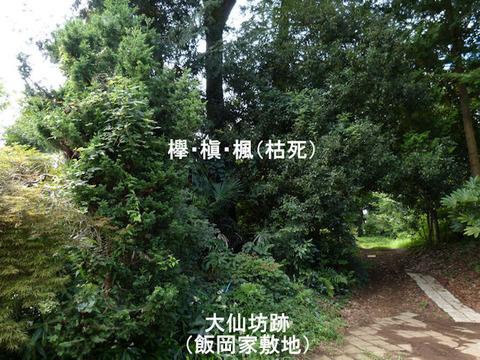 130824大仙坊(結縁寺)飯岡善三所有地 文字