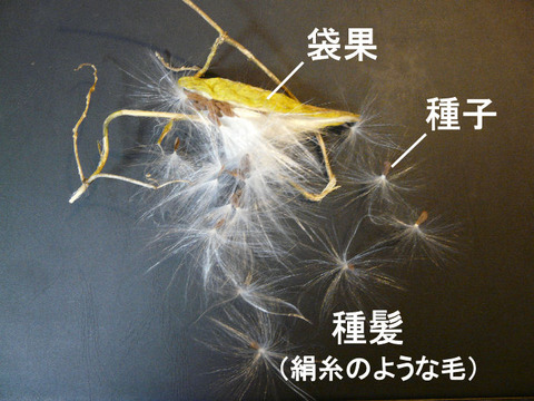 3,091120ガガイモ(二重川)s文字