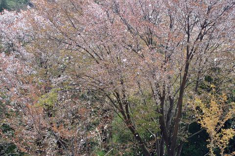 2017-04-15_071_桜川市_平沢林道第一展望台より