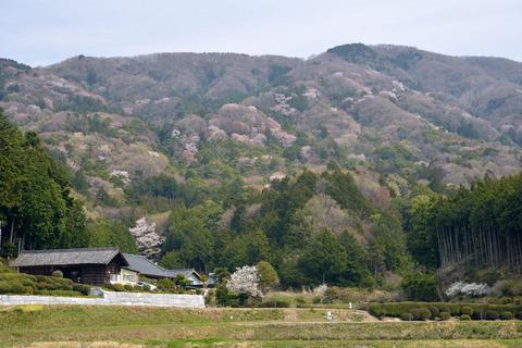 2017-04-15_027_桜川市平沢より高峯