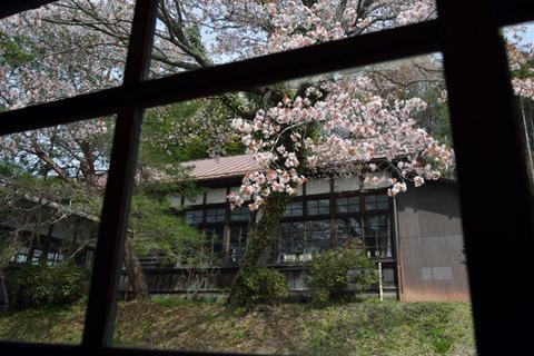 2016-04-09_058_軽_大子観桜会
