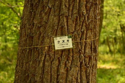 140419RCNが作った木の名前表示