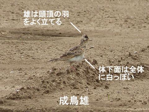 ②-1 120628ヒバリ(大野) s