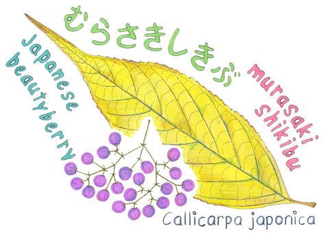 MURASAKI-SHIKIBU-1