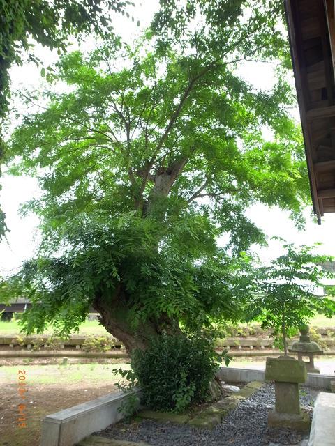 20130615サイカチ印西 (3)