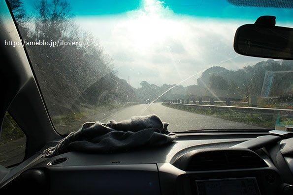 わんこと行く正月旅行その⑤。~聖地、和歌山パンダーランドへ~