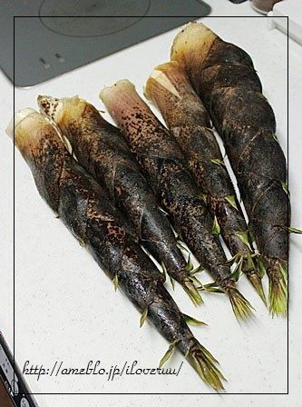 株式会社TAKENOKO。~超かわええ♡筍の肉詰め~
